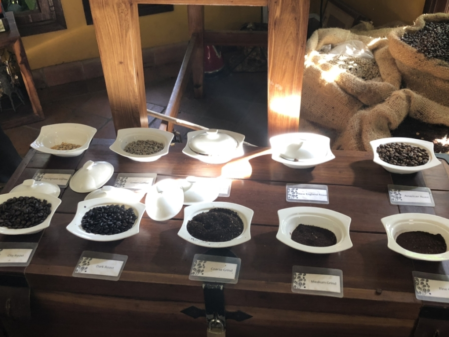 Arusha, Tanzania, Coffee Lodge, Plantation, coffee beans