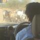 Tanzania, safari, safari guide, wildlife, abercrombie & kent