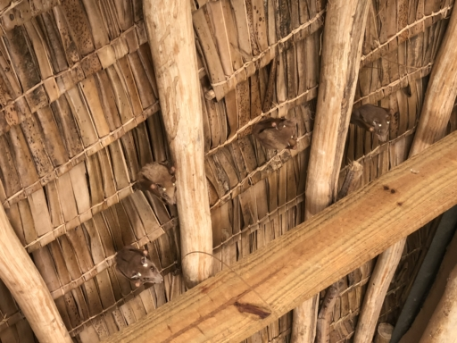 bats, tarangire, tarangire treetop, tanzania, abercrombie & kent