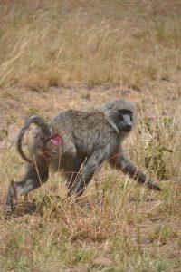 This is Serengeti