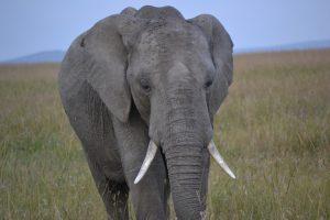 Onward to Serengeti